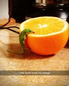 """Yum! Fresh Orange Juice!"""