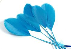 5-7 Inch French Cut Feathers (5) Turquoise Blue Trimmed Quills for Making Dressy Fascinators and Unique Earrings. A Flat Stiff Decoration Rooster Feathers, Pheasant Feathers, Peacock Feathers, Blue Feather, Blue Bird, Peacock Bird, Black Spot, Fascinators, Unique Earrings