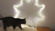 Henkaritähti: Näin teet joulun hittikoristeen helposti itse Christmas Time, Xmas, Holidays And Events, Christmas Decorations, Animals, Bricolage, Plants, Animales, Animaux