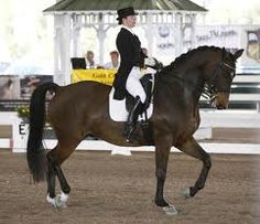 Yes please.. dressage