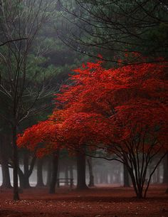 Photography by Unknown. #Art #Color #Photography #Trees #Nature