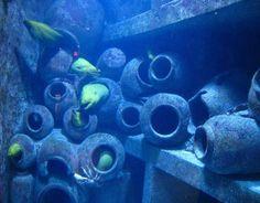 Weird green moray eels in Atlantis aquarium
