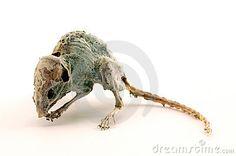 Um rato inoperante assustador 2