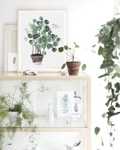 Botanical Art: Portraits of Houseplants from Dutch Painter Maaike Koster (Gardenista: Sourcebook for Outdoor Living) Deco Nature, Green Life, Green Plants, My New Room, Watercolor Print, Botanical Prints, Indoor Plants, Interior Inspiration, House Plants