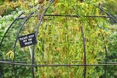 "The gardens also contain opium poppies, tobacco, psilocybin (""magic"" mushrooms), coca plants (where cocaine comes from), and cannabis (pictured below with a clever sign!)."