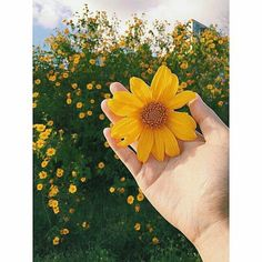 23 Creative Photographs That Are Mindblowing Hand Flowers, Love Flowers, My Flower, Beautiful Flowers, Sunflower Wallpaper, Pretty Pictures, Aesthetic Wallpapers, Scenery, Fan Art