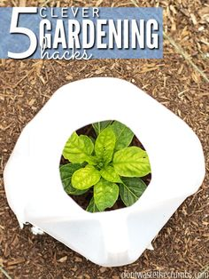Awesome gardening hacks that really work! Tips for tomatoes, bugs, watering and keeping plants warm in cooler weather. Tried & true, these gardening tips are worth giving a try! :: DontWastetheCrumb… Awesome gardening hacks that Growing Tomatoes In Containers, Growing Vegetables, Grow Tomatoes, Organic Gardening Tips, Gardening Hacks, Vegetable Gardening, Gardening Shoes, Balcony Gardening, Organic Farming