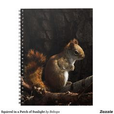 Squirrel in a Patch of Sunlight Spiral Note Book