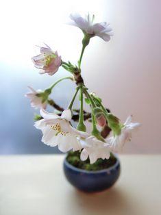 Petit Bonsai: 画像