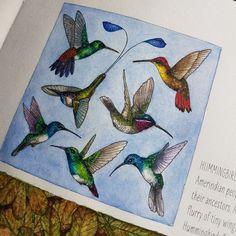 A charm of hummingbirds caption in rainforest escape by jade gedeon.