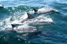 Liguria eco sostenibile: Primo contest fotografico, destinato a tutti gli amanti della fotografia, del mondo marino e della natura