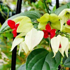 Season Colors, Beautiful Flowers, Plant Leaves, Colours, Seasons, Garden, Plants, Garten, Seasons Of The Year