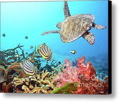 Butterflyfishes And Turtle Canvas Print / Canvas Art By Mothaibaphoto Prints