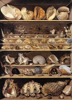 Leroy de Barde, A Selection of Shells Arranged on a Shelf, watercolor and gouache, 1803.
