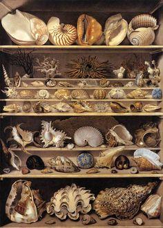 Leroy de Barde, A Selection of Shells Arranged on a Shelf, watercolor and gouache, 1803.