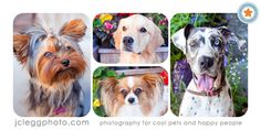 Pet Photography: 7 Surefire Tips for Capturing a Dog's Personality