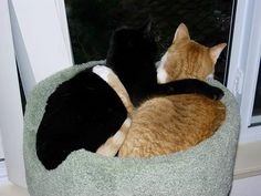 Hi Homer and Homers mom! I had to share this pic with you. It is of my cats Sherman ( the orange) and Angus. Sherman went over the rainbow bridge in 2007 at age 3. He had a bad heart. Angus is still alive and I wrote to you about him. These two were brothers and as you can tell, they loved each other very much. Angus and I love all the happy stories you post. Thank you! (submitted by Cathi Sloan)