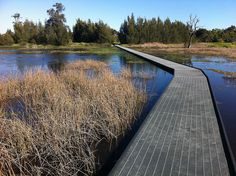 Freshwater Wetland, Hunter Wetlands National Park, Newcastle by Doug Beckers, via Flickr