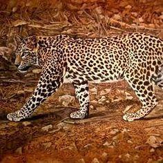 Camouflaged by Ajay Singh Peelwa Buy Paintings Online, Artwork Online, Online Painting, Wildlife Paintings, Indian Artist, Camouflage, Original Paintings, Art Pieces, Museum