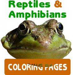 Amphibians & Reptiles Coloring Pages