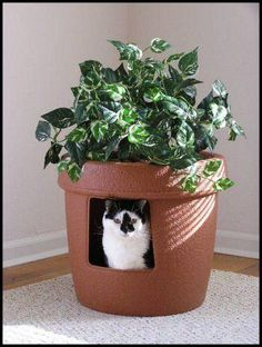 Green-ify your litter box! A dash of nature and the litter box is no longer an eyesore in the house.  Photo:  Apartment Therapy
