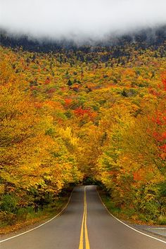 Amazing Autumn tree tunnel at Smuggler's Notch State Park, Vermont.