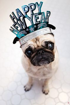 Silly pug, it isn't new year... <3 You're still adorable.