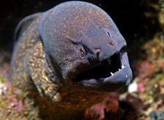 Cool sea creatures
