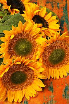 Bunch Of Sunflowers Photograph  - Bunch Of Sunflowers Fine Art Print