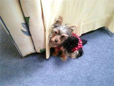 My dog Lacey. Ruth, Gordonsville, VA - 8/11/2015