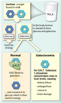 Galactosemia ( trying to find stuff to eat!!)