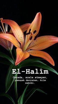 Allah Islam, Islam Muslim, Islamic Art, Islamic Quotes, Mecca Islam, Learn Turkish, Religion, Bible, Romance