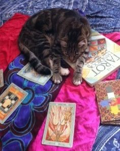 Luna opts for Tarot Submission by Osmosis, naps on Angels Arrien's Tarot Handbook
