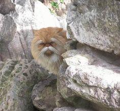Elder-cat