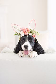 DIY Floral Bunny Ears -- next year along with my regular Easter decorations, I am totally decorating my dogs!