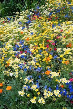How to Create a Wildflower Garden in the City Schöner wilder Blumengarten Beautiful Flowers Garden, Pretty Flowers, Yellow Flowers, Beautiful Gardens, Wild Flowers, Summer Flowers, Rainbow Flowers, Wild Flower Gardens, Wild Flower Meadow