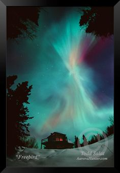 Freebird, aurora borealis photo from Alaska