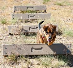 Little Dry Creek Dog Park - Westminster, CO