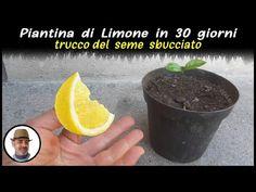 Begonia, Lemon Plant, Sounds Of Birds, Love Natural, Natural Garden, Plantar, Fruits And Vegetables, Fall Crafts, Aloe
