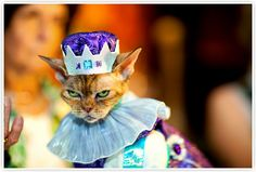 Katie Sokoler - Cat Fashion Show-yeah,the cat looks really happy!!