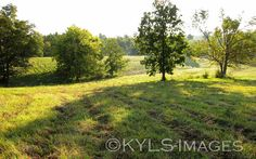 this is in Perryville.  www.KYLandSales.com