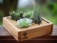 Succulent Gardening, Garden Terrarium, Succulent Terrarium, Cacti And Succulents, Planting Succulents, Cactus Planta, Cactus Y Suculentas, Wood Planters, Garden Planters