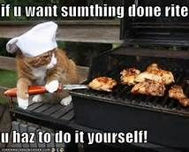 Funny Cat Pictures with Captions Cheeseburger - Bing Images