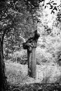 "Titulo: ""S/T"" Foro: ARBOLES / TREES Autor: Gatel Williams Fotógrafo amateur Pais: Francia http://galeria.blipoint.es/willykylephotography/"