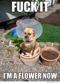im-a-flower-now-dog