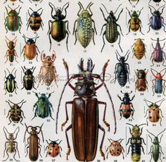 Colorful Beetles Bugs Insects Print 2 From by AntiquePrintsAndMaps, $6.00