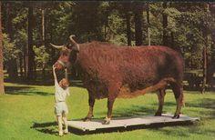 Big Ben - Worlds largest preserved steer - in Kokomo, Indiana