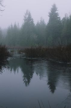 millivedder:  Foggy Reflections Seabeck WA   Prints