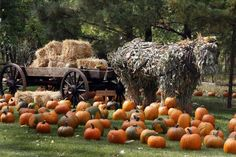 Papa's Pumpkin Patch: Billy Bob the Corn Stalk Horse and His Wagon in Bismarck, ND #kids
