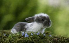 A tiny bunnie....
